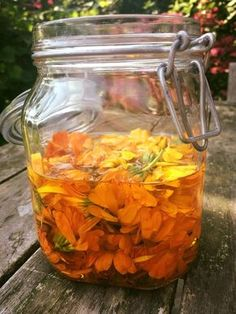 Zo makkelijk en mooi is het om zelf calendula olie te maken! Pluk flink wat calendula bloemen, doe ze in een pot (met deksel) en vul aan met olie. (Ik heb biologische zonnebloemolie gebruikt maar je kan eventueel ook olijfolie gebruiken). Zet de pot minimaal 2 weken in de zon (vensterbank), elke dag even draaien en …