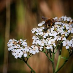 Fra skønne Helnæs #visitfyn #fyn #nature #visitdenmark #naturelovers #nofilter #natur #denmark #danmark #dänemark #landscape #assens #mitassens #vildmedfyn #fynerfin #assensnatur #vielskernaturen #visitassens #instapic #picoftheday #flora