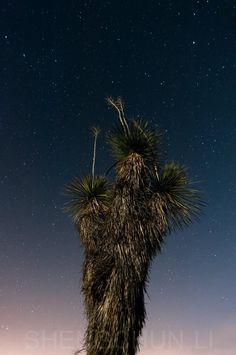 Enjoy the silent and night ….. in New Mexico!!!! Discover beauties from barren land……..  Picture take by Shengchun Li