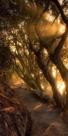 Mount Maunganui base track, Bay of Plenty, New Zealand