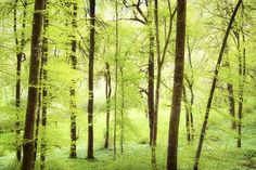 Bright green forest in spring with beautiful soft light Canvas Print / Canvas Art by Matthias Hauser Spring Nature, Spring Day, Fine Art Prints, Framed Prints, Bright Green, Green Colors, Fresh Green, Canvas Art, Canvas Prints