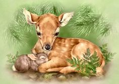 Penny Parker Images - fawn & bunny
