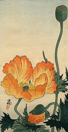 Orange Poppies, by Ohara Koson (Japan, Bird Illustration, Illustration Artists, Botanical Illustration, Illustrations, Botanical Drawings, Botanical Art, Ohara Koson, Art Chinois, Japanese Flowers