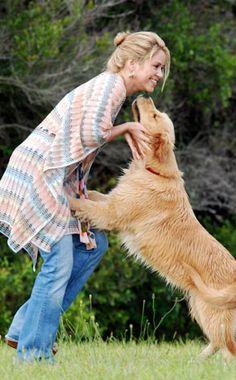 Beautiful golden retriever! (Shakira)