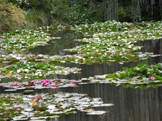 Giverny - Monet's house - Claude Monet's Famous Painting Series Water Lilies came from these beautiful Waters in his garden at Giverney