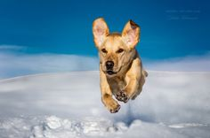 """""""I velieve I can fly"""" by CreativeArtView Dogs vs Cats Photo Contest Finalists! Blog - ViewBug.com"""