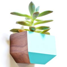 You'll love the Boxcar Rectangle Wall Planter at Wayfair - Great Deals on all Outdoor products with Free Shipping on most stuff, even the big stuff.
