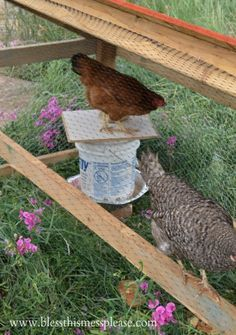DIY chicken water and feeder from 5-gallon buckets from www.blessthismessplease.com