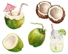 Coconut, Commission by Alicia Severson Illustration and Design Watercolor Food, Watercolor Illustration, Watercolor Paintings, Watercolors, Food Drawing, Painting & Drawing, Mahalo Hawaii, Food Illustrations, Food Design