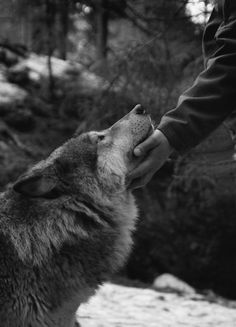 wolf with Jenna Marie.  (someday)