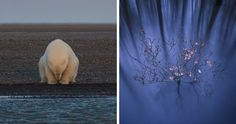 The Winners Of The 2016 National Geographic Nature Photographer Of The Year Contest | Bored Panda