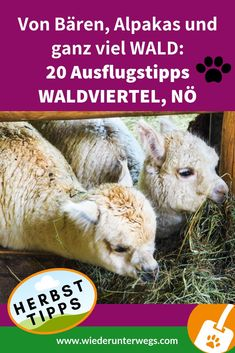 Kind Und Kegel, Europe Travel Guide, Teddy Bear, Outdoor, Animals, Ursula, German, Hotels, Happiness