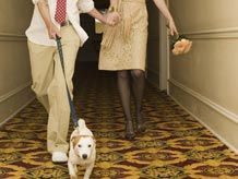 Finding Fun, Dog-Friendly Hotels Across the Country Dog Friendly Hotels, Fun Dog, Interesting Information, Pet Stuff, Dog Friends, Best Dogs, Fur Babies, Your Pet, Dog Cat