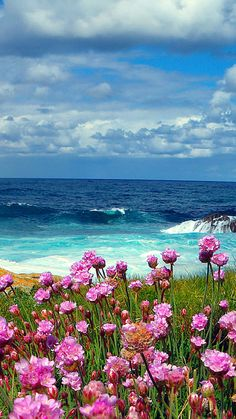Layers of flowers, sea and sky.