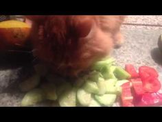 My feline brother Jack is a cucumber thief! Mother was trying to prepare dinner and he insisted on stealing a snack. First he was pulling them off the cutting board to eat on the island. Then he got bold and decided to eat right off the board. Mother saved the red peppers in the knick of time!