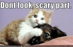 Funny Dogs And Cats – Dangerous Games : Funny Pictures
