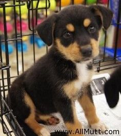 Beagle Rottweiler Mix! Same dog I had as a kid :) (before it was cool to have mixed breeds)