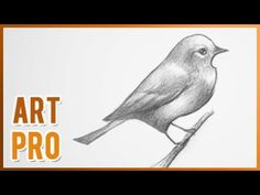 In this video, you can learn how to draw birds with pencil step by step, very easy.