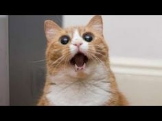 funny animals,funny cats compilation 2014,funny cat videos,funny top cats crazy,funny videos cats HD http://www.youtube.com/watch?v=pY635VD9rxQ