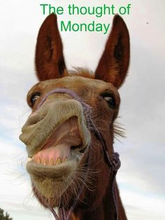 Animal Jokes, Funny Animals, Cute Animals, Funny Cute, Hilarious, Happy Thursday Quotes, Monday Quotes, Bozo, Pomes