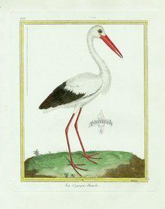 Martinet c1770's: Cigogne blanche. White Stork