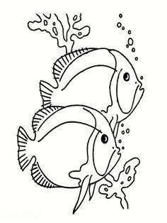 beaux poissons