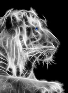 White Tiger by Shane Bechler IncrediblePhotoArt.com
