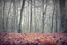 Forest - SUNLIGHT STUDIOS #art #forest #tree #trees #autumn #fall #leaves #seasons