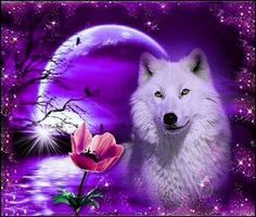 Wolf Images, Wolf Photos, Wolf Pictures, Beautiful Wolves, Animals Beautiful, Cute Animal Memes, Cute Animals, Anime Wolf Drawing, Dream Catcher Art