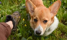 5 Incredible Things Dogs Sense About You