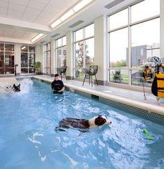 Swimming Pool at Olde Towne Pet Resort - Dulles
