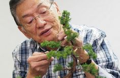 Bonsai is the Japanese art form of growing and pruning miniature trees.visit http://bonsaitreecarehub.com/ to find all of the tips and resources you need for proper bonsai tree care from watering, pots, fertilizer and more can be found within this site. You no longer