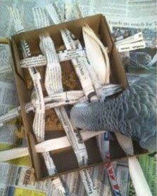 Turn a box into a foraging toy for your parrot! Get a small cardboard box and poke holes along the top of each side. Diy Parrot Toys, Diy Bird Toys, Totoro, Homemade Bird Toys, African Grey Parrot, Budgies, Baby Parakeets, Parrots, Bunny Toys