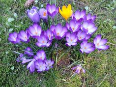 Spring has sprung 2013 :)