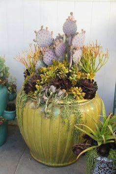 cacti container garden, container gardening, succulent container garden, hot weather container garden