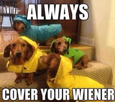 Funny pictures about Don't forget to cover it. Oh, and cool pics about Don't forget to cover it. Also, Don't forget to cover it. Funny Dog Memes, Funny Dogs, Funny Animals, Cute Animals, Animal Funnies, Animal Memes, Dog Funnies, Funny Captions, Animal Captions