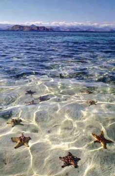 Love Nature - Beautiful World. Photos of Amazing Places in the World Starfish beach, Grand Cayman Dream Vacations, Vacation Spots, Vacation Travel, Bali Travel, Hawaii Travel, Travel List, Vacation Destinations, Travel Bucket Lists, Surf Travel