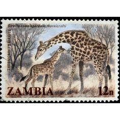Zambia, Wild Life, Giraffe, 1984 unused