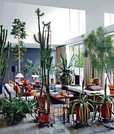 green life in the home. the tall ceilings are huge windows probably help. this is a dream.