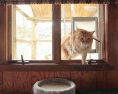 All season outdoor cat habitat - http://www.instructables.com/id/Build-an-All-Season-Outdoor-Cat-Habitat/?ALLSTEPS