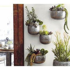 Roost Braza Indoor/Outdoor Wall Planters by Roost