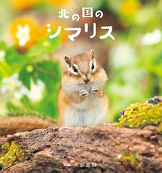 Chipmunk in the Northland #Chipmunk #GiftBook #PhotographyBook