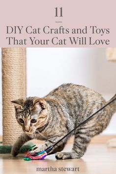 Make your cat happy with one of these easy handmade cat toys and cat crafts that your kitty will enjoy and even use. From classic cat toys like handmade mice to a hanging window cat perch and many more. #marthastewart #lifestyle #petcare #pets Wolf Spirit Animal, Cat Perch, Catnip Toys, Cat Crafts, Cat Stuff, Martha Stewart, Cool Cats, Mice, Pet Care
