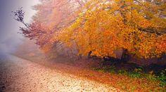 [바탕화면] 초고화질 바탕화면 이미지 가을 바탕화면 아름다운 가을 쥬르날의 에피소드