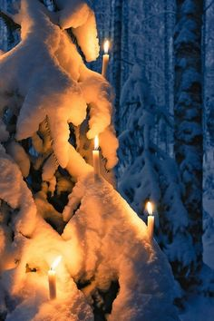 lit candles on snow covered tree