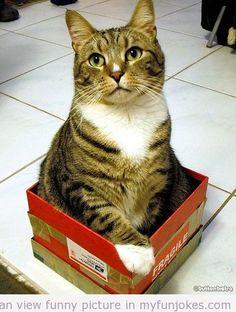 Cat & Box! funny images  - http://www.myfunjokes.com/other-funny/cat-box-funny-images/