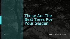 These Are The Best Trees For Your Garden - Kyle Cathie Growing Tree, Small Gardens, Trees, Good Things, Little Gardens, Home Decor Trees, Wood, Small Yards, Plant
