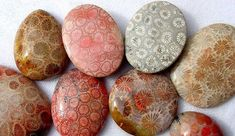 I know corals are animals, but I thought this fit well with other stone pins :) Agatized Coral Cabochons. Minerals And Gemstones, Crystals Minerals, Rocks And Minerals, Stones And Crystals, Petoskey Stone, Mineralogy, Beautiful Rocks, Rocks And Gems, Rock Art
