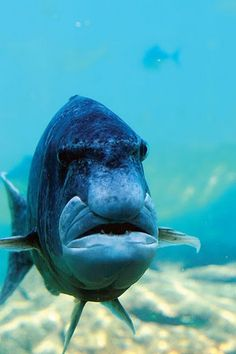 A Fish ~ Without A Sense of Humor! ✿⊱╮