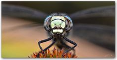 hello Background Images, Insects, Animals, Beautiful, Hd Wallpaper, Wallpapers, Kingsman, High Definition, Backgrounds
